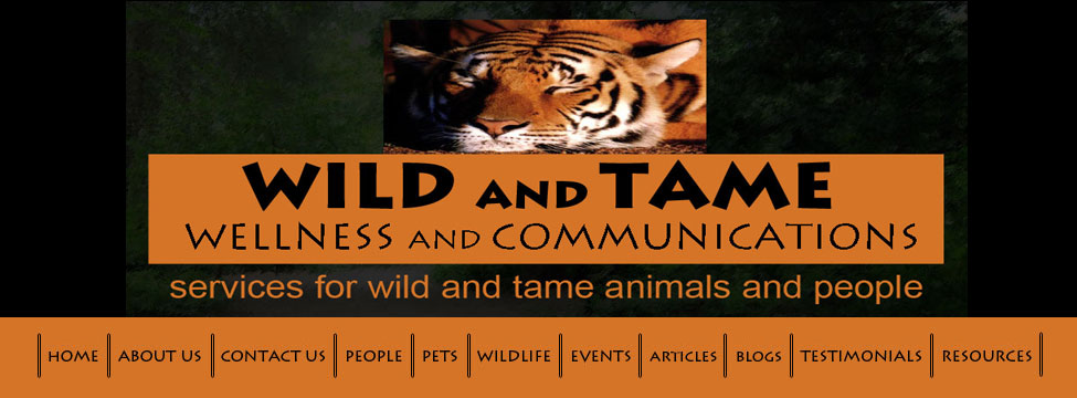 wild and tame banner with treed path and tiger